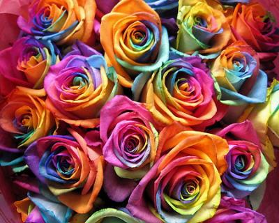 rainbowrose.jpg