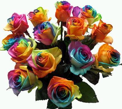 rainbowrose01.jpg